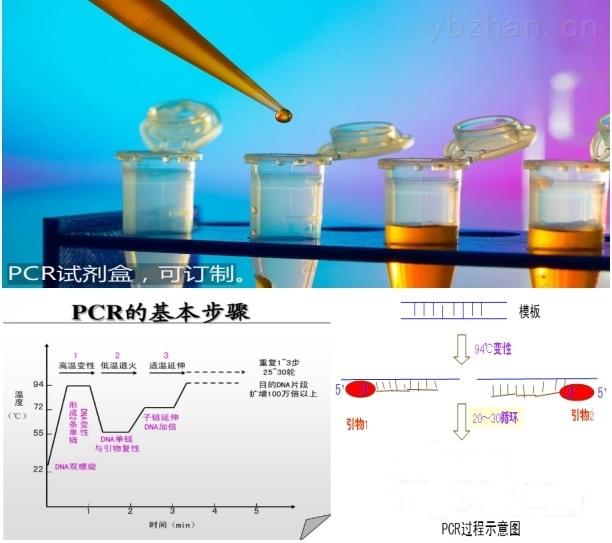 鮑皰疹樣病毒PCR檢測試劑盒說明書
