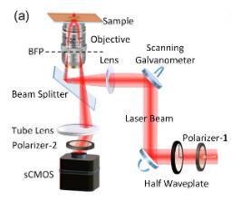中国科学技术大学表面波光学显微镜研究取得进展