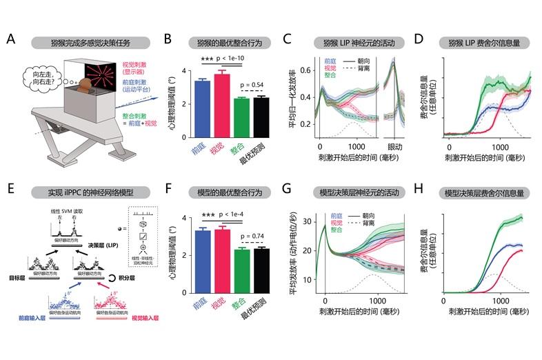 多模態感覺信息整合與決策的神經機制研究獲進展