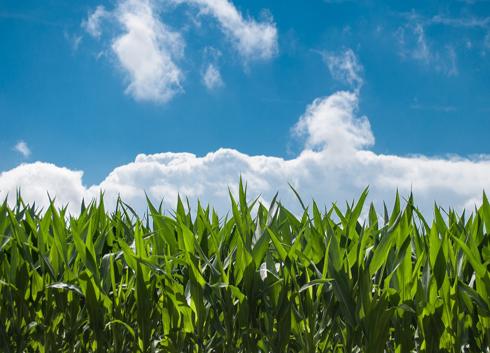 世界環境日 環境監測儀器儀表助力改善環境質量